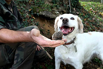 A truffle hunting in Abruzzo